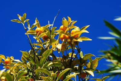 Bormes les Mimosas - foto di Silvia C. turrin