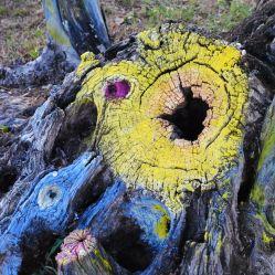 l'ulivo acchiappasogni - foto Provenza da Scoprire