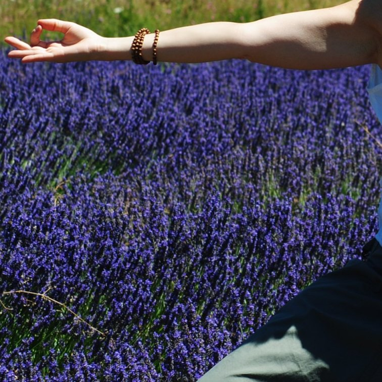 om-provenza-lavanda Mindfulness