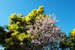 bormes les mimosas 2014-02-20 062